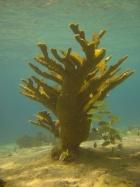 blok koraal