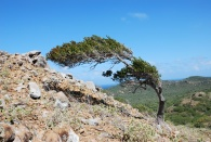 boom op de Brandaris