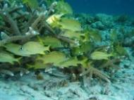 vissen in koraal