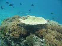 koraaltuin